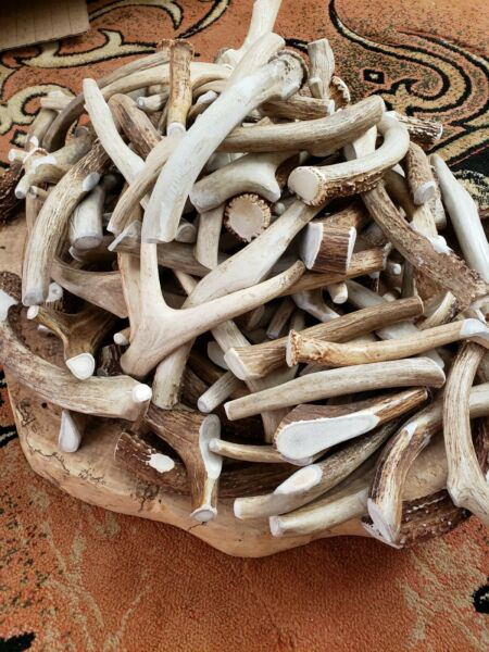 Whole Real DEER ANTLER Dog Bone chews Medium Large XL Treat Toy XXL