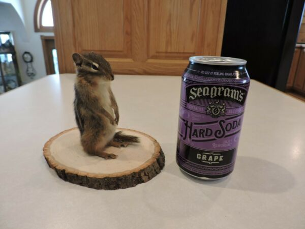 Taxidermy Chipmunk Squirrel Mount Novelty Present Whitetail Deer Log Cabin Decor