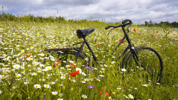 Framed Print Old Bike on a Wild Flower Meadow Picture Poster Bicycle Art $11.63