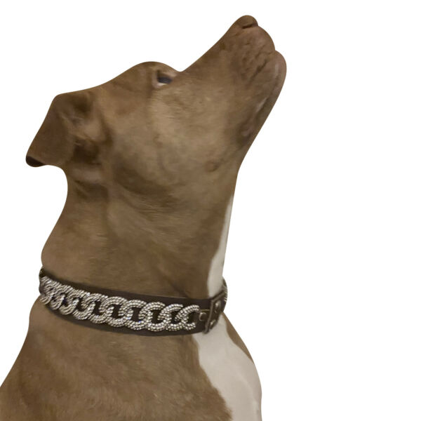Raviani Fancy Dog Accessories Dog Collar Full Crystal on Brown Cowhide Leather $48.50