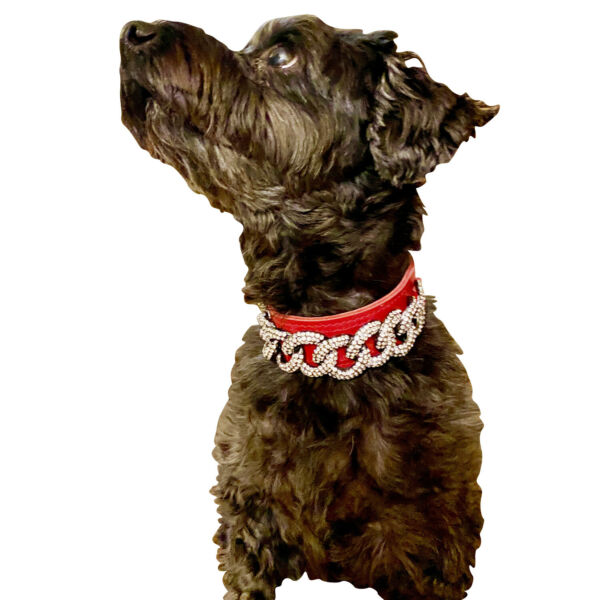 Raviani Fancy Dog Accessories Dog Collar Full Crystal on Cowhide Leather Made In $26.95