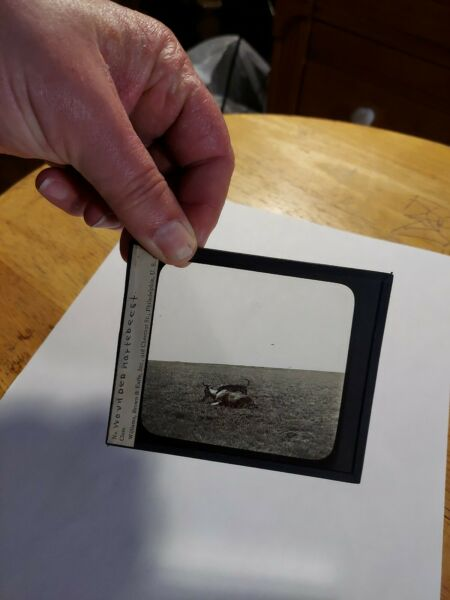 Magic Lantern Glass Slide Dog Africanis? holding wounded hartebeest Safari $15.00