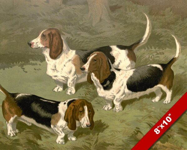 BASSET HOUNDS PET PUPPY DOG DOGS ANIMAL ART PAINTING PRINT ON REAL CANVAS $14.99