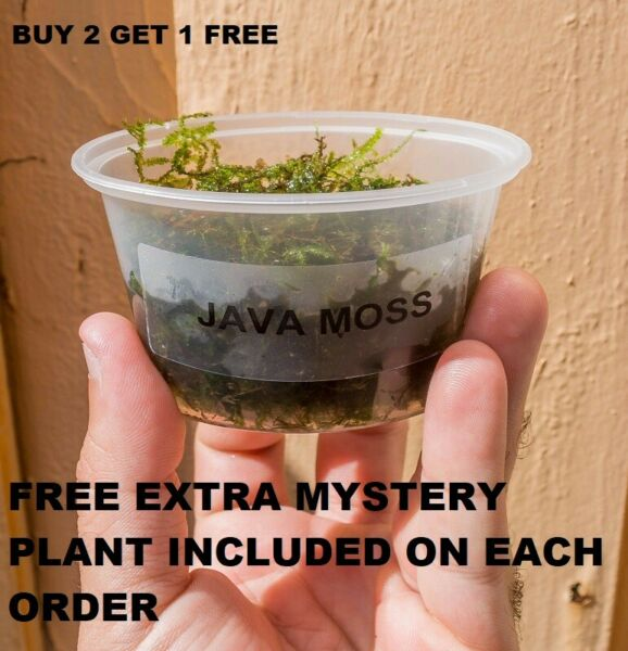 BUY 2 GET 1 FREE Java Moss Freshwater Live Aquarium Plants planted tank aquarium $8.50
