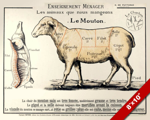 Vintage French Le Mouton Meat Diagram Painting 8x10 Real Canvas Food Art Print $14.79