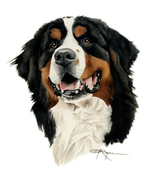 BERNESE MOUNTAIN DOG Painting 11 x 14 LARGE Art Print by DJ Rogers wCOA