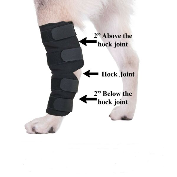 Knee Brace For Dogs Hock Protector ACL Therapeutic Dog Rear Leg 4 Strap SMLXL $27.99