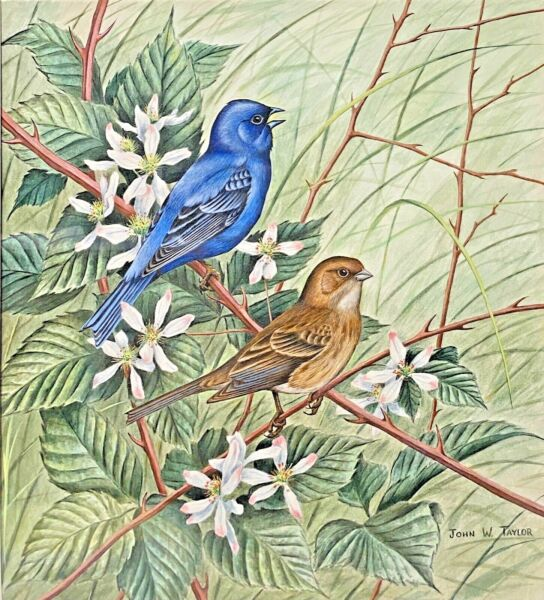 Original Bird Art Painting Indigo Bunting Pair by John W. Taylor Signed Framed