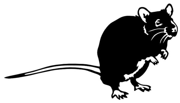 RAT Vinyl Decal Sticker Car Window Wall Bumper Mouse Animal Home Decor Hamster