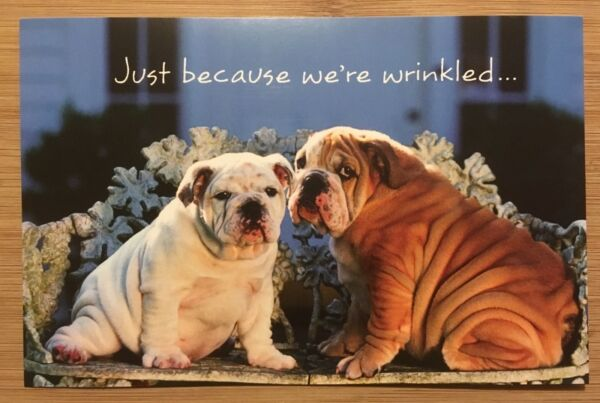 Happy Birthday Card With Envelope Funny Dogs Thoughtful Message USA $2.40