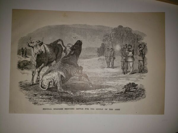 Union Soliders Cattle for Food Supply Civil War 1896 Sketch $29.99