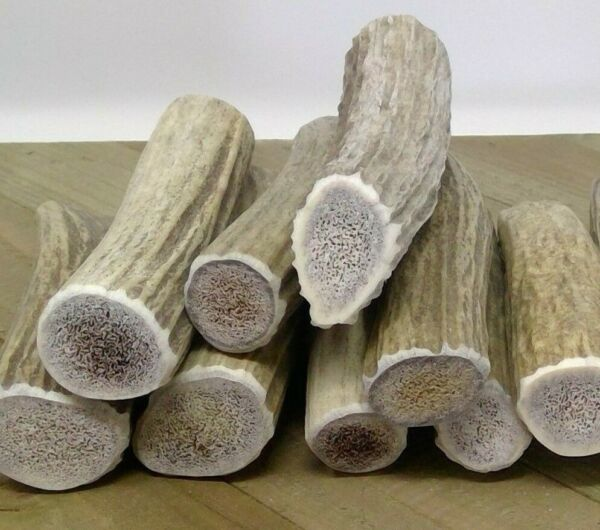 Soft Marrow Whole Elk Antlers for Small Dogs Chew Toy Treat Lot Puppy Teething