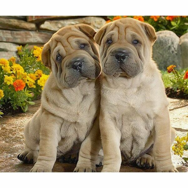 Shar Pei Diamond Painting Cute Puppies Dog Patterns House Wall Decors Embroidery $8.99