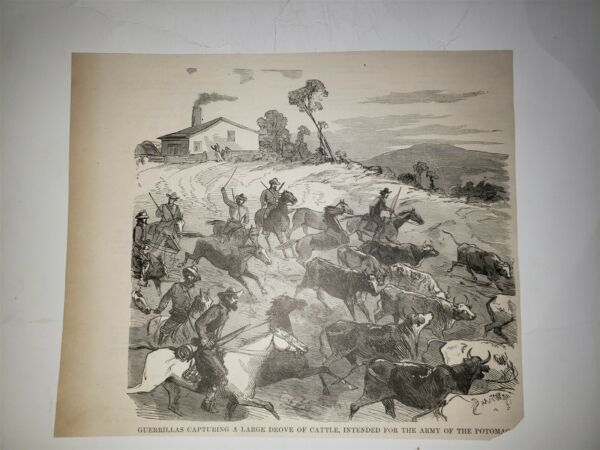 Guerillas Capturing Cattle for Army of Potomac 1884 Civil War Sketch Print $29.99