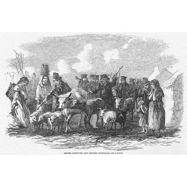 IRELAND Driving Cattle for Rent between Oughterard amp; Galway Antique Print 1849 GBP 9.95