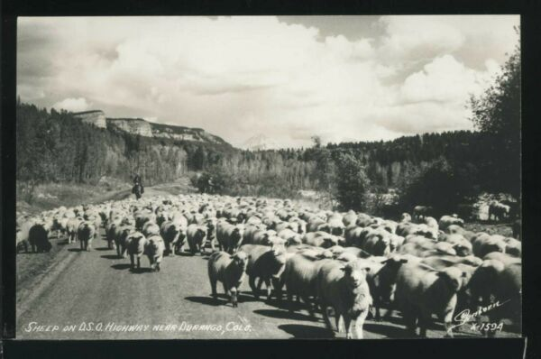 CO Durango RPPC 1950#x27;s MOB of SHEEP on D.S.O. HIGHWAY by Sanborn No.X 1594
