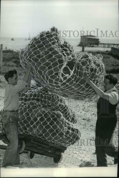 1940 Press Photo Workmen Piling Sponges on a Small Carrier Near Coastline $19.99