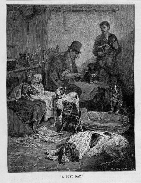 DOG SHEARING DOGS GETTING HAIRCUT CLIPPED ANTIQUE 1884 ENGRAVING DOG HAIRCUT $36.00