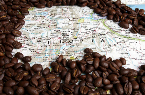 5 10 15 lbs Ethiopian Yirgacheffe Washed Grade 1 Fresh Coffee Beans Current crop