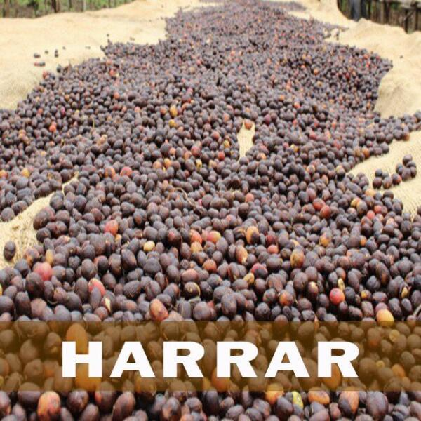 Up to 15 lbs Ethiopian Queen City Harrar Grade 4 Fresh Coffee Beans WholeGround