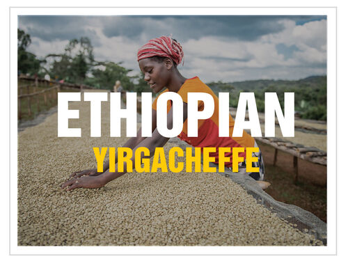 up to 100 lbs Ethiopian Yirgacheffe Washed Grade 1 Fresh GreenRaw Coffee Beans
