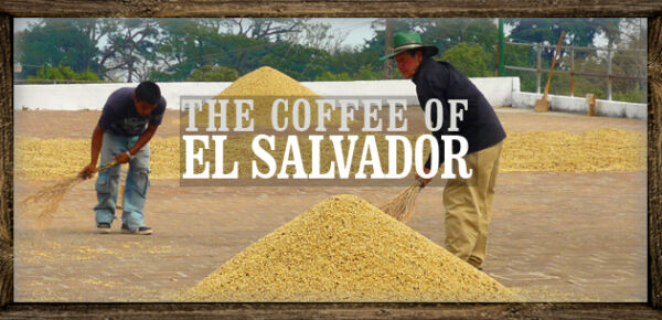Up To 100 lbs El Salvador SHG Santa Maria RFA Certified Fresh Green Coffee Beans