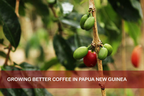 5 10 15 lbs Papua New Guinea Organic Estate Fresh Coffee Beans Roasted Daily