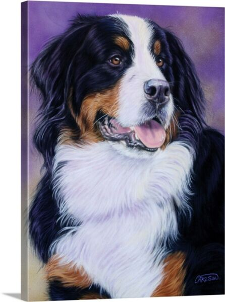 Solid-Faced Canvas Print Wall Art entitled Bernese Mountain Dog