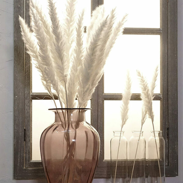 15x Reed Natural Dried Small Pampas Grass Phragmites Artificial Plants Decor US