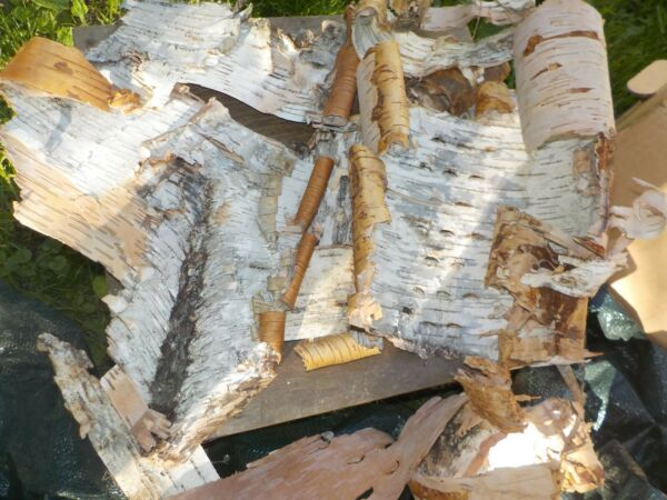 3 White Birch Bark Pieces Odd Shapes for Crafts Art Taxidermy