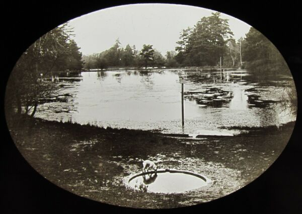ANTIQUE Magic Lantern Slide DOG DRINKING WATER NEAR LAKE C1900 PHOTO GBP 15.00