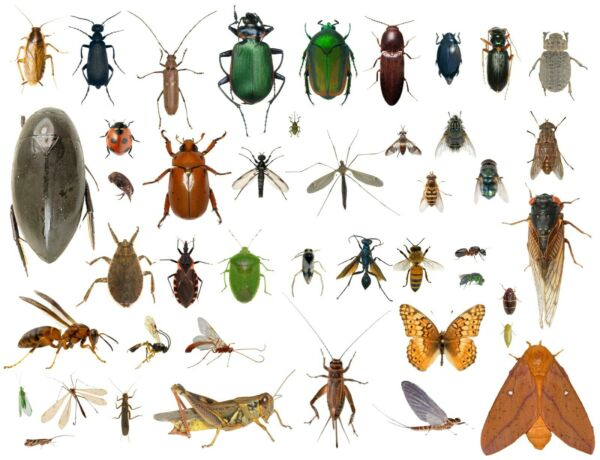 35 Dead Bugs Entomology Class Insect Bug Collection IDENTIFIED USA In Alcohol $35.00