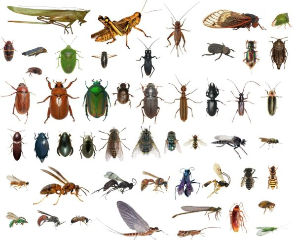 50 Dead Bugs Entomology Class Insect Bug Collection IDENTIFIED ALL USA NATIVE $50.00