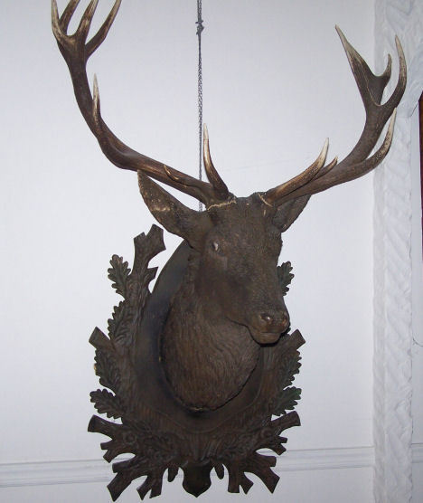 Antique Black Forest Carved Life Size Elk Head with Original Elk Antlers