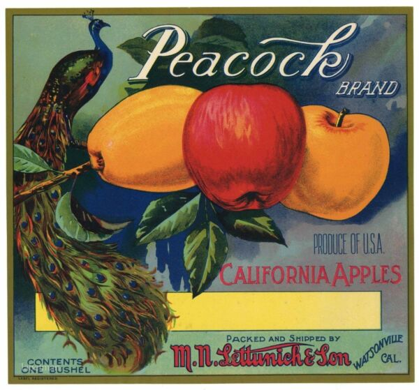 PEACOCK Brand Watsonville Lettunich  *AN ORIGINAL APPLE CRATE LABEL* 359