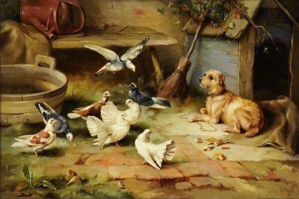 Dog and Pigeons by Edgar Hunt $15.95