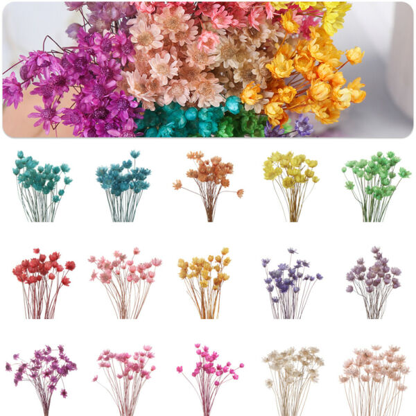 Wedding Supplies Home Decor Floral Bouquets Small Star Dried Flowers Mini Daisy