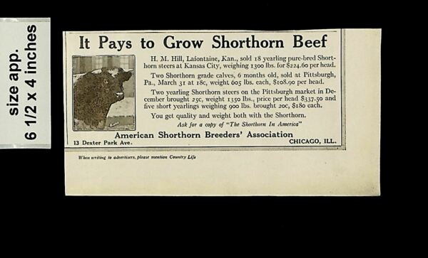 1919 Pays to Gow Shorthorn Beef Breeders Cattle Vintage Print ad 14511