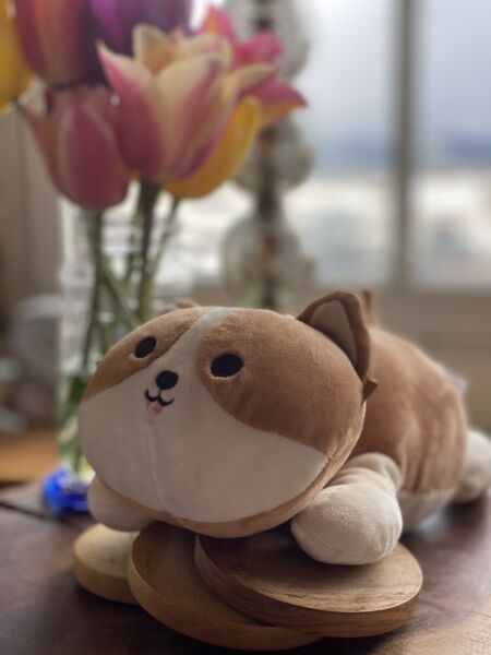 Brown and Cream Corgi Dog Hug Mee Squishmallow Kelly Toy Plush Reginald $15.00