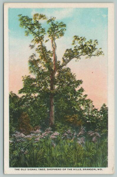 Branson MO Shepherd Of The Hills Old Signal Tree 1920s Postcard
