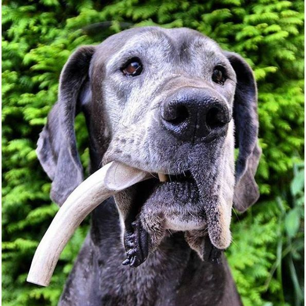 Organic Antler Chews For Dogs $17.04