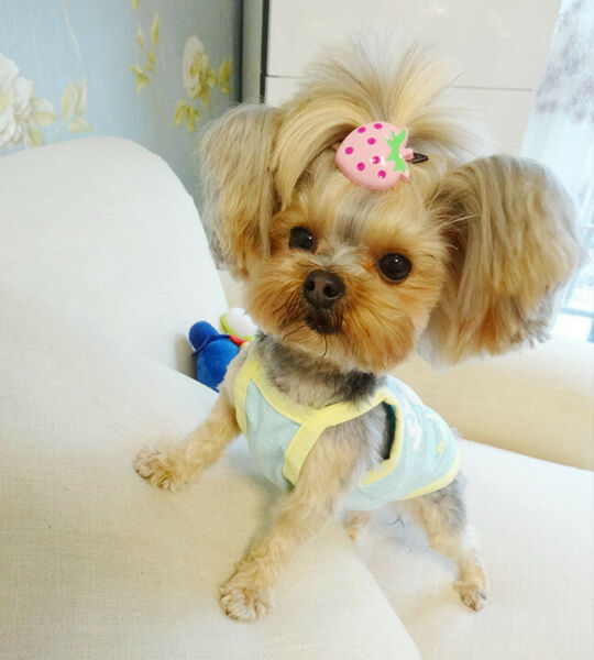 Pet Tank Top Soft Dogs Clothes Comfortable Puppy Costume Spring Blue Pink Cute $7.99