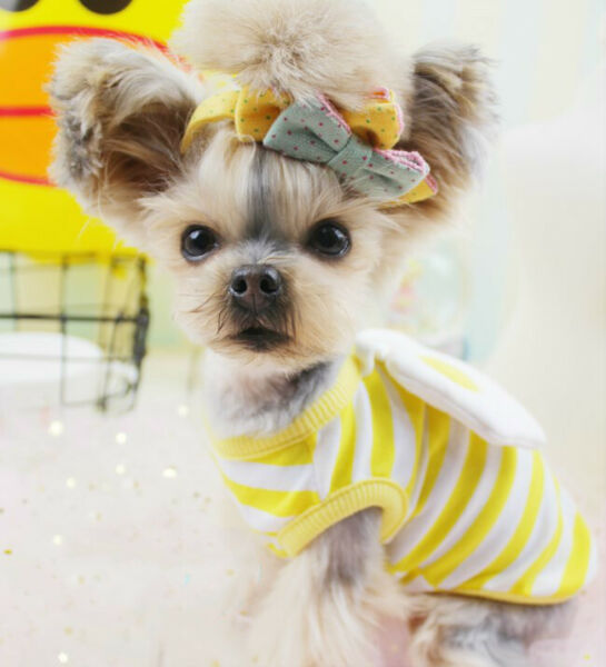 Pet Tank Top Soft Dogs Clothes Shirt Costume Puppy Comfy Spring 3D Egg Cute $12.99