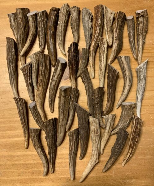 12 Pack Deer Antler Brow Tine Points Tips Arts Crafts Length: 1quot; to 3quot; $25.00