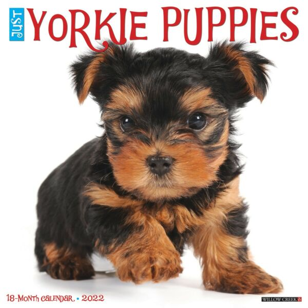 Just Yorkie Puppies 2022 Wall Calendar Dog Breed Free Shipping $14.99