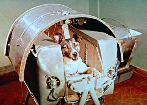 Laika First Dog In Space Capsule 8x10 Picture Celebrity Print $3.98
