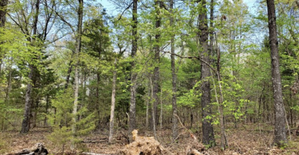 Perfect Access Near Creek and Lake - .29 acres in AR - Don't miss out!