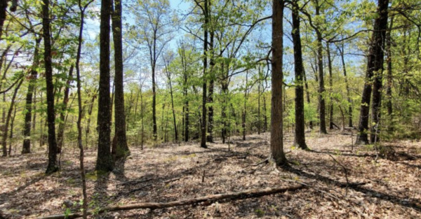 Secluded Hiking and Lake Living! .21 acres in AR - Check This One Out!