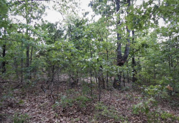 Don't miss out! .24 acres in AR - Coveted Lakeside Serenity!