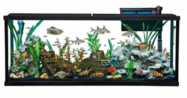55 Gallon Fish Tank w decor Filter and Heater Top Fin Starter Kit $200.00